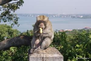 Гора обезьян — Кхао Сам Мук (Khao sam muk)