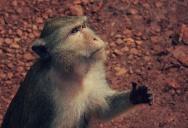 Кормежка обезьян в экскурсии на Квай