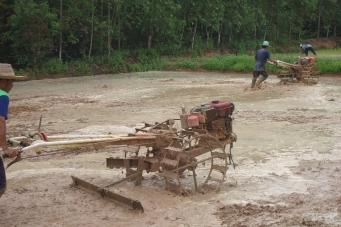 Сажаем рис в Таиланде - самоучитель! ( Planting rice in Thailand - tutorial! )