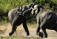 Шесть слонов на дороге в Таиланде вынудили мужчину бросить мопед