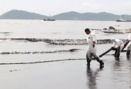 Oil Spill spread to Samet Island's Ao Prao