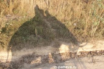 Слоновая деревня (Elephant Village)