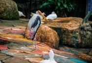 Птицы в саду Nong Nooch, Pattaya, Thailand