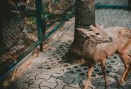 Как мы кормили оленей в Нонг Нуч, Паттайя