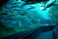 Рыбы в Океонариуме Паттайя
