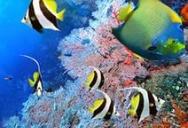 Океанариум в Паттайе. Underwater World Pattaya