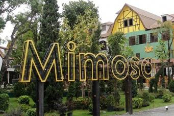 Мимоза — Город любви
