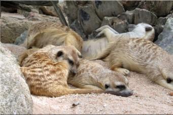 Зоопарк Khaow Kheow в Паттайе