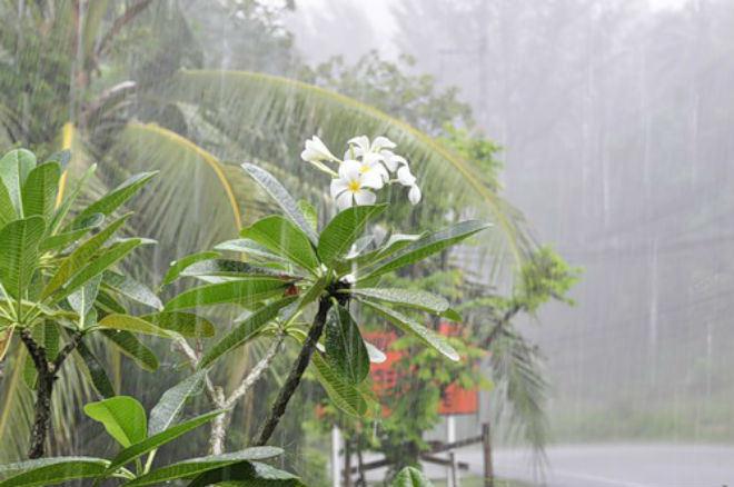 Периодические дожди будут лить 3 дня