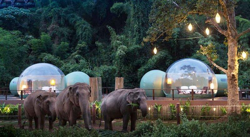 В Таиланде туристам предлагают переночевать среди слонов