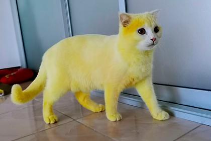 Мурчащий лимончик: женщина, спасая кошку, случайно окрасила ее в желтый цвет