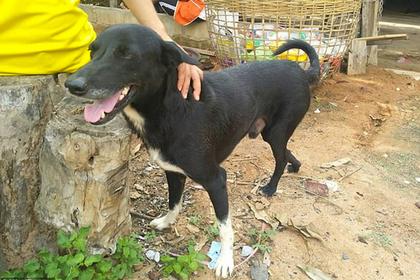 В Таиланде собака спасла заживо похороненного младенца