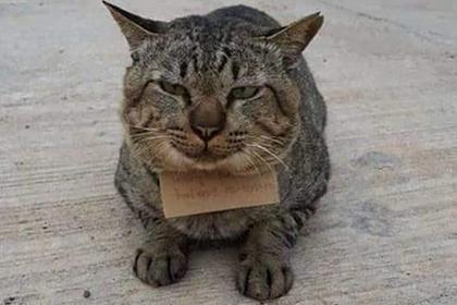 Кот пропал на три дня и вернулся домой в долгах