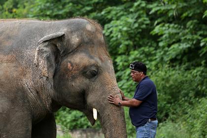 «Самому грустному слону» нашли новый дом в Камбодже