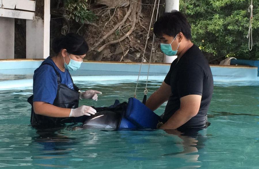 Подобранному на Най-Янге дельфину требуется помощь волонтеров