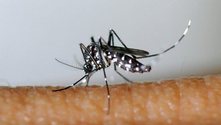 В Таиланде продолжается борьба с лихорадкой денге