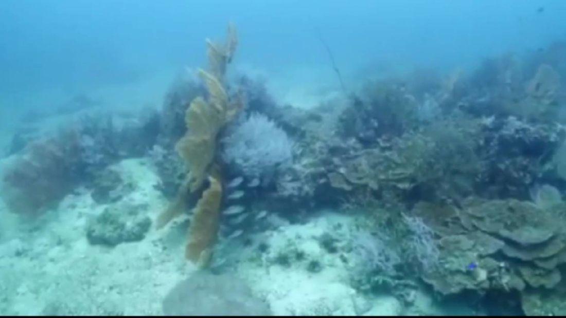 На Пхи Пхи обнаружили обесцвечивание кораллов