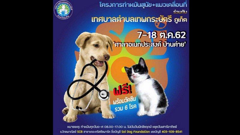 Фонд Soi Dog проводит бесплатную стерилизацию и вакцинацию кошек и собак в Таланге