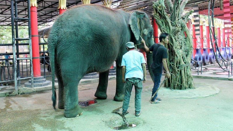 В пхукетском зоопарке не обнаружили жестокого обращения с животными