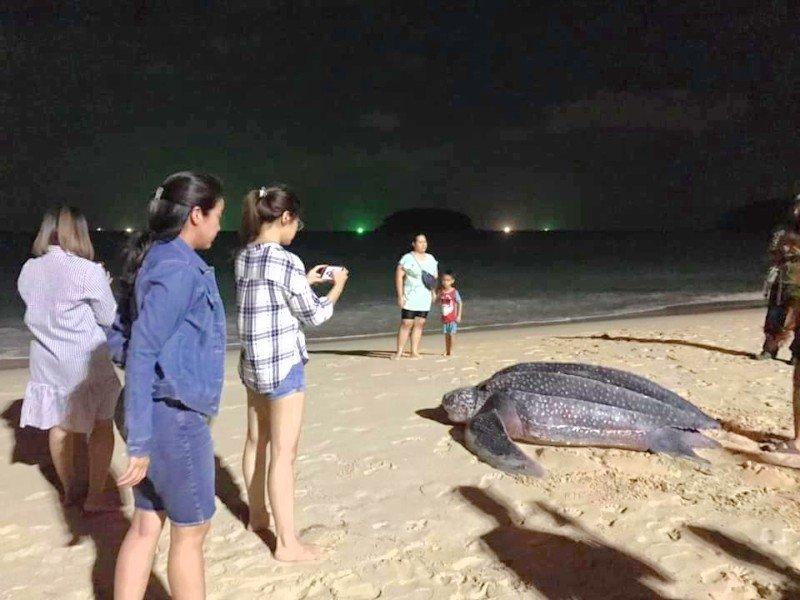Морская черепаха отложила яйца на пляже Ката на Пхукете
