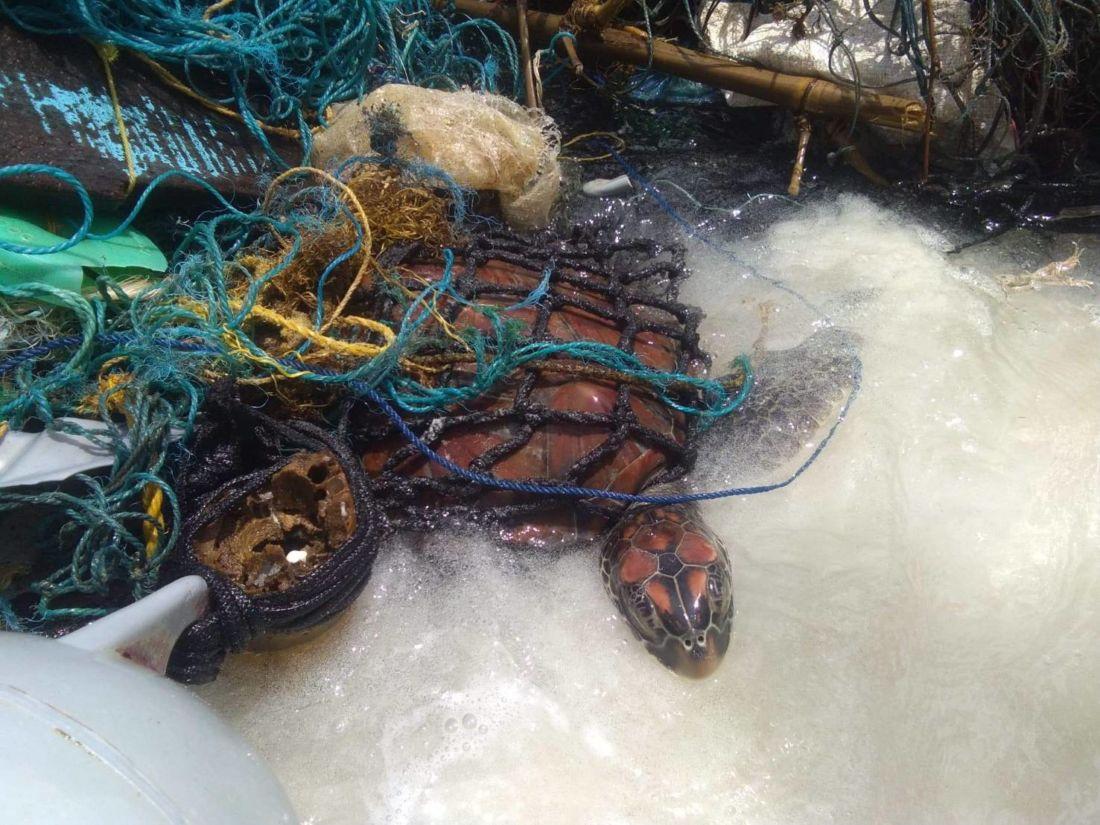 Морскую черепаху спасли недалеко от Пхукета