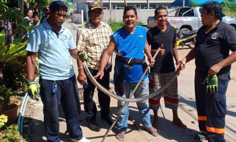 В Раваи поймали двухметровую кобру