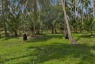 Marleen Im Palmenwald