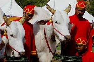 В Таиланде сегодня отмечают праздник Первой Борозды 13 мая в стране объявлен выходной