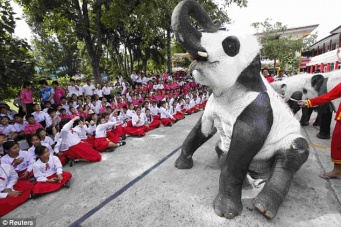 Thai people desperately adore pandas forgetting about the true symbol of their Kingdom.