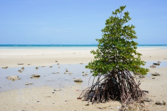 Пляж Банг-Макхэм
