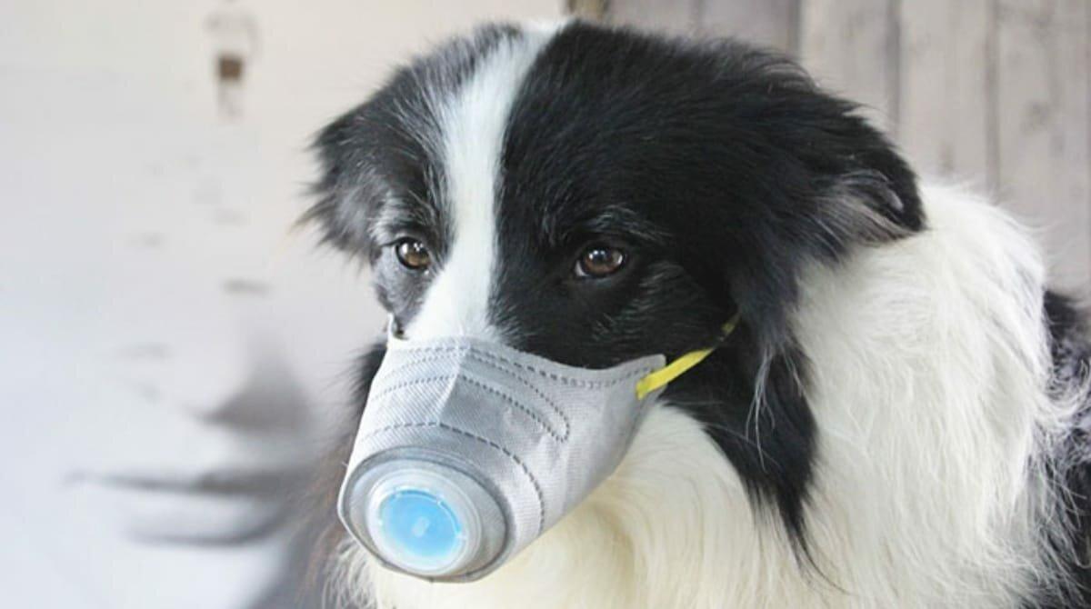 В Таиланде собак научили определять COVID-19 по поту инфицированных