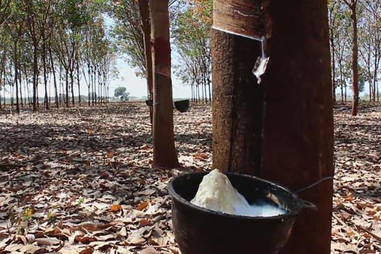 Таиланд стал крупнейшим в мире экспортером каучука