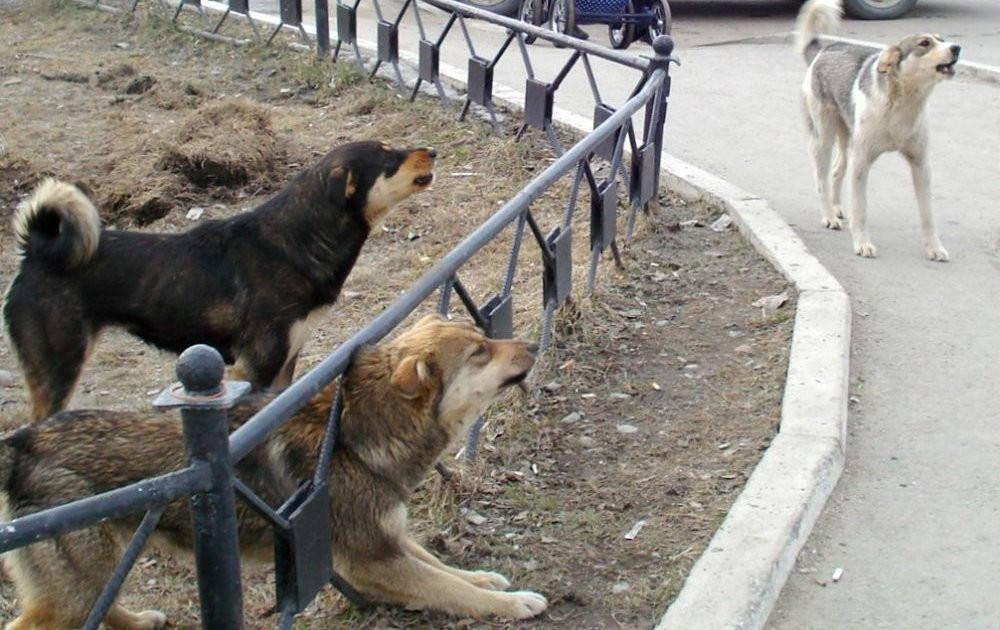 В Ао-Нанге после нападения на юного туриста взялись за отлов бродячих собак
