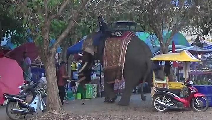 Слон с девушкой на бивне разгромил ярмарку в Таиланде. Видео