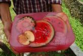 Звери зоопарков Тайланда охлаждаются фруктами со льдом