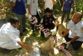 На Пхукете найден бирманец без головы.