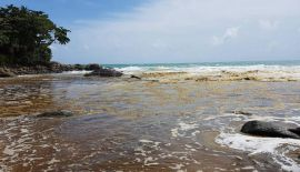Муниципалитет Карона отверг предположения о сливе сточных вод в море. Cпециалисты университета Phuket Rajabhat University cоообщили, что вода  меняет цвет из-за обилия планктона