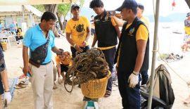 В понедельник, 5 ноября, у побережья Патонга прошел массовый подводный субботник. Участники мероприятия собрали 412 кг мусора