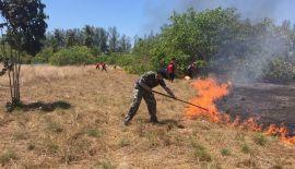 Крупный пожар произошел на территории нацпарка Khao Lampi - Hat Thai Mueang National Park в среду, 27 февраля