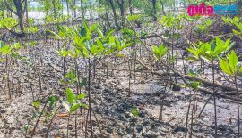 В провинции Пханг Нга  состоялось мероприятие по  сохранение лесных ресурсов дикой природы