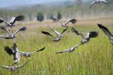 Птицы счастья на Пхукете