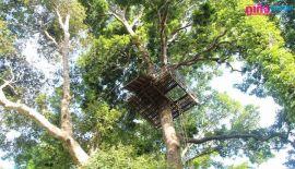 Министерство природных ресурсов и охраны окружающей среды во главе с генеральным директором Департамента лесного хозяйства провели проверку в Экстрим-парке Jungle Xtrem Adventures