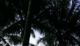 Таиланд, Пхукет: Банановый пляж