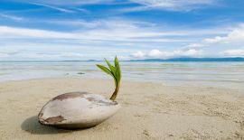 Погрузитесь в Остров Самуи