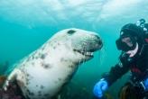 О дивный подводный мир! Лучшие снимки от фотографов-дайверов