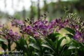 Phuket Orchid Lab