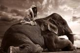 Профессиональный фотограф на Пхукете и Бали