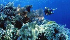 Черепаховый остров (о. Самуи)