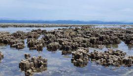 Редкое явление во время отлива на побережье Хуа Хина. Двухкилометровый участок пляжа в районе Банг Сапхан Ной представил уникальное зрелище морского дна со скрытой красотой коралловых рифов и гигантских моллюсков