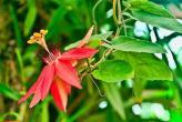 Вот как цветут фрукты Тайланда